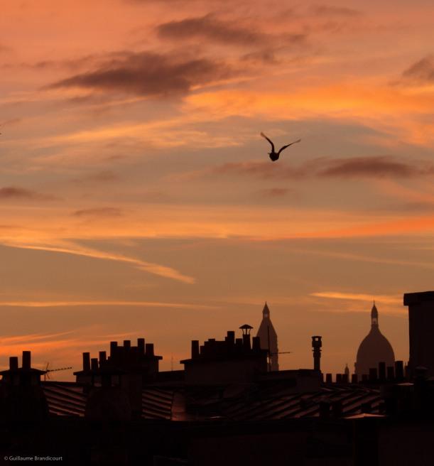 L'oiseau Paris, 7h 13 septembre 2013