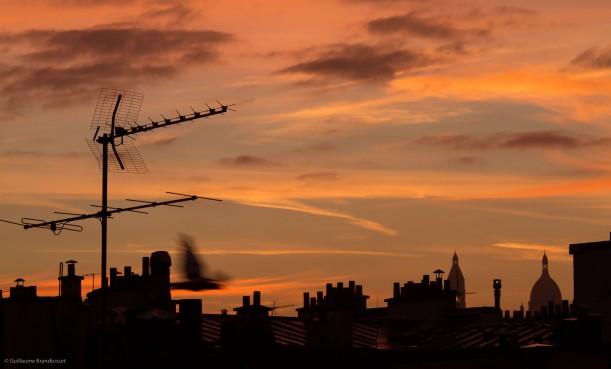 L'oiseau, Paris, 7h 13 septembre 2013