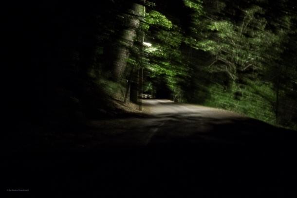 A forest, spirits, 4 août 2013