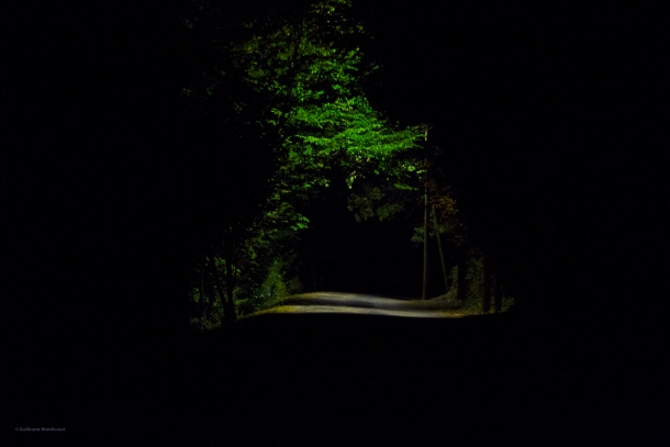 A forest, 4 août 2013