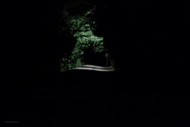 A forest, 16 août 2013
