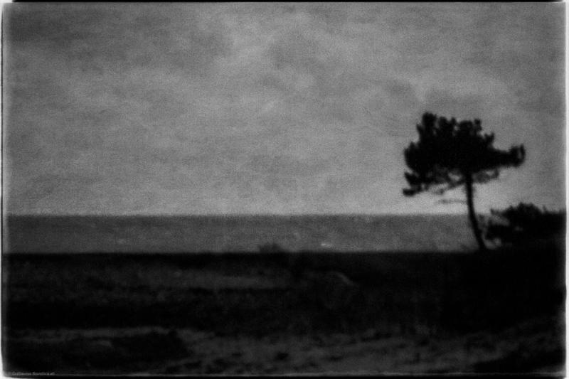 L'arbre peint du littoral au couchant Bretagne (The coastal painted tree at sunset), 2 novembre 2013