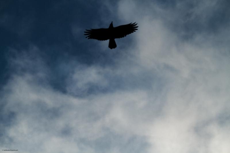 L'oiseau d'Orsay 1er décembre 2013