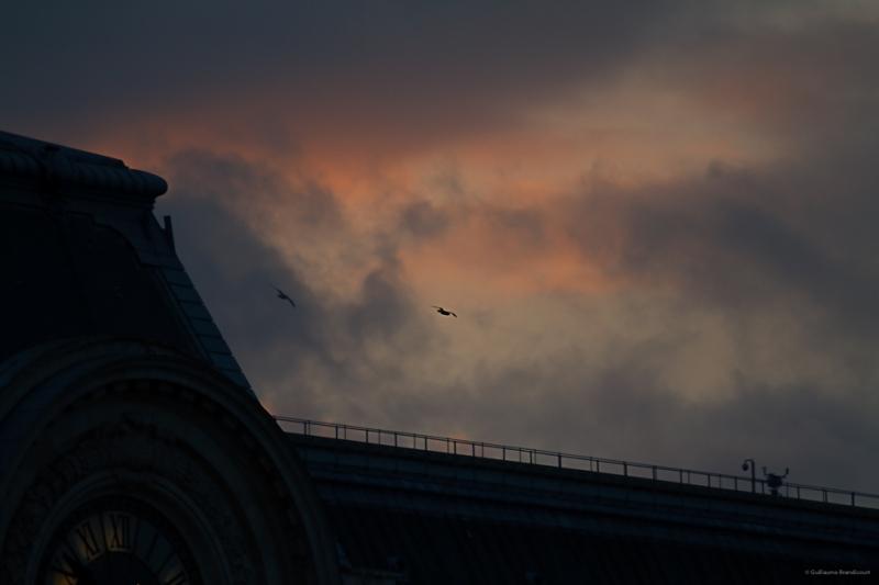 Rampage - Les oiseaux du Musée d'Orsay 1er décembre 2013