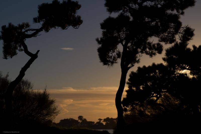 Les arbres du Men Du au couchant - Carnac 7 décembre 2013