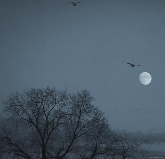 Les oiseaux de la Lune Paris 15 décembre 2013