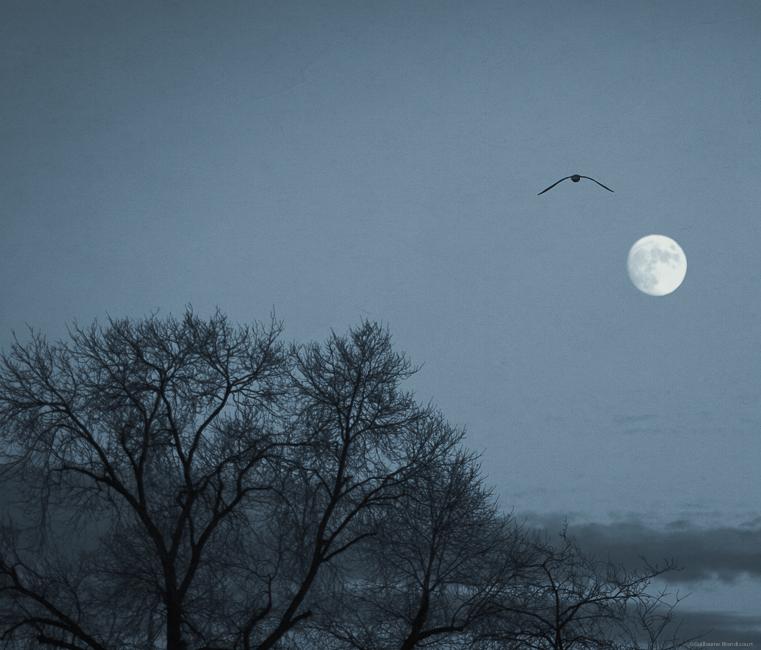 L'oiseau de la Lune Paris 15 décembre 2013