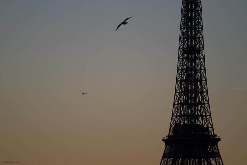 Les oiseaux et la Tour 15 décembre 2013