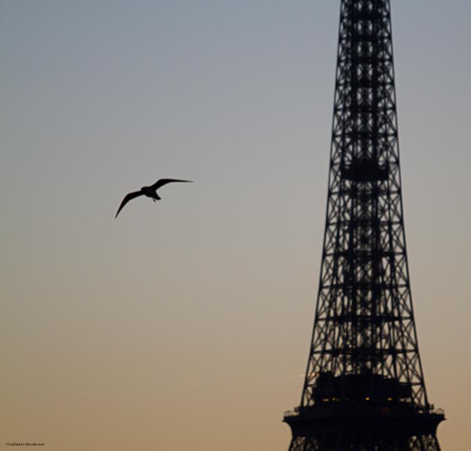 L'oiseau et la Tour 15 décembre 2013
