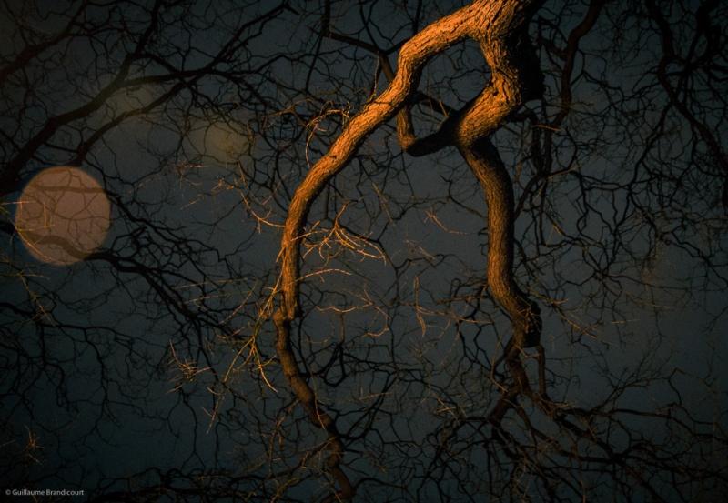 """""""La danse de l'arbre sur l'eau, se défiant du bokeh de la pluie 2"""" Paris 3 février 2013"""