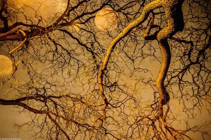 """""""La danse de l'arbre sur l'eau, se défiant du bokeh de la pluie"""" Paris 3 février 2013"""