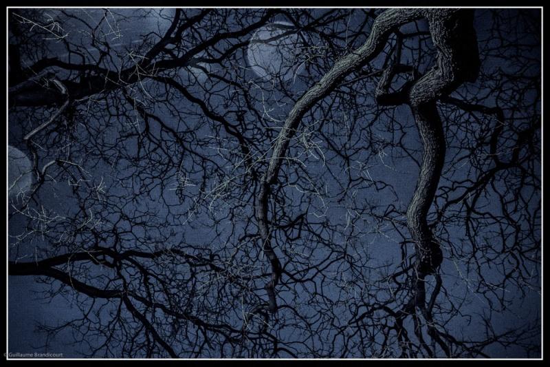"""""""La danse de l'arbre sur l'eau, se défiant de la pluie, sous le regard des 2 lunes"""" Paris 3 février 2013"""