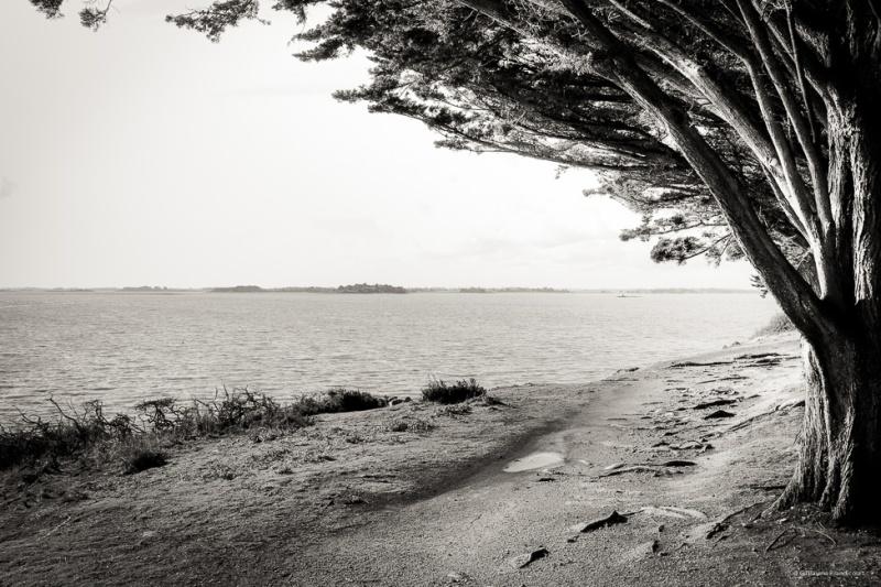 Esprit de l'arbre  Monstarrac, Golfe du Morbihan Février 2014