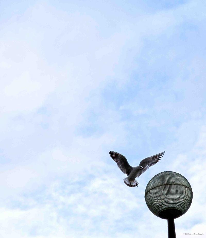 Atterrissage : Fasten seat belt Happy landing Quais de Seine février 2014