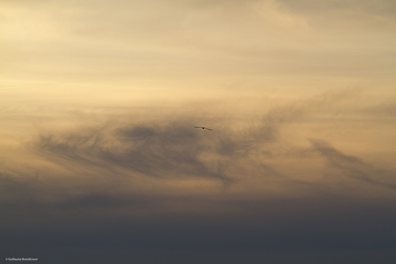L'oiseau dans les nuages au coucher Paris, quais de Seine Février 2014