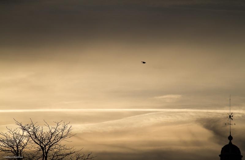 Paris, quais de Seine, oiseau Coucher Février 2014
