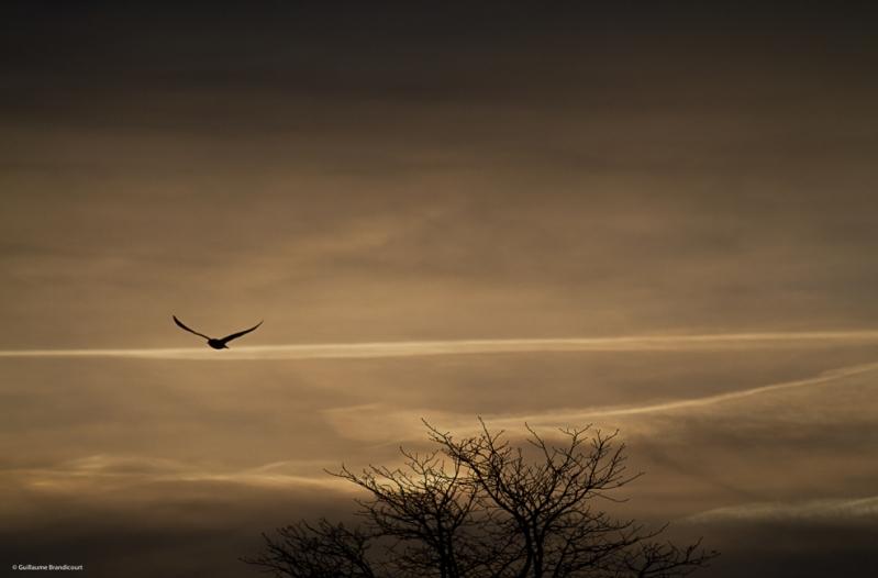 L'oiseau dans les nuages au coucher II Paris, quais de Seine Février 2014