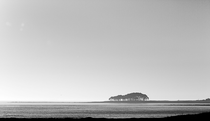 Bosquet dans le Golfe Mars 2014