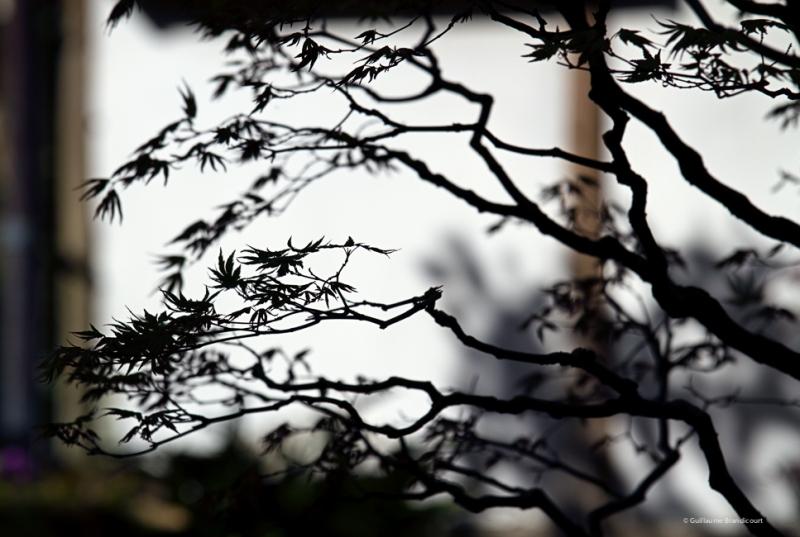 Les dernières heures de l'hiver dans le jardin japonais Fall winter in the japanese garden March 2014