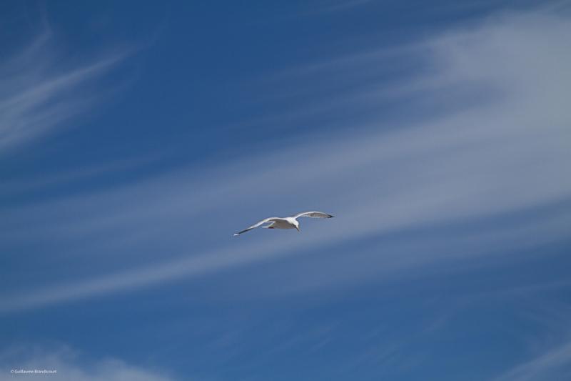 L'oiseau dans le fil des nuages Océan Juin 2014