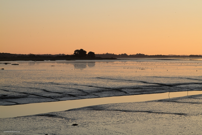 Au couchant - Mudflat at sunset Morbihan 29 décembre 2014