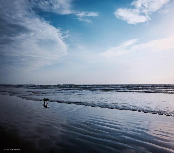 Lonely Dog Un dimanche en Bretagne Octobre 2015 (c) GB